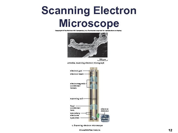 Scanning Electron Microscope Copyright © The Mc. Graw-Hill Companies, Inc. Permission required for reproduction