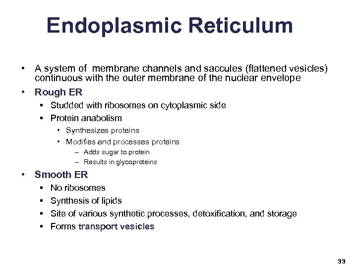 Endoplasmic Reticulum • A system of membrane channels and saccules (flattened vesicles) continuous with