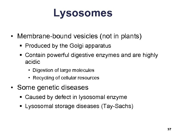 Lysosomes • Membrane-bound vesicles (not in plants) § Produced by the Golgi apparatus §