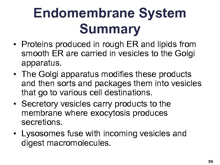 Endomembrane System Summary • Proteins produced in rough ER and lipids from smooth ER