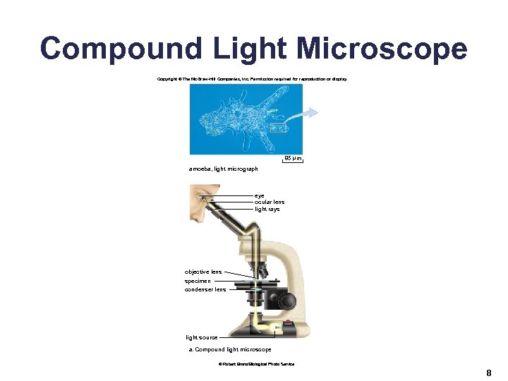 Compound Light Microscope Copyright © The Mc. Graw-Hill Companies, Inc. Permission required for reproduction