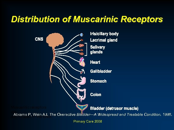 Distribution of Muscarinic Receptors Muscarinic receptors are Abrams P, Wein AJ. The Overactive Bladder—A