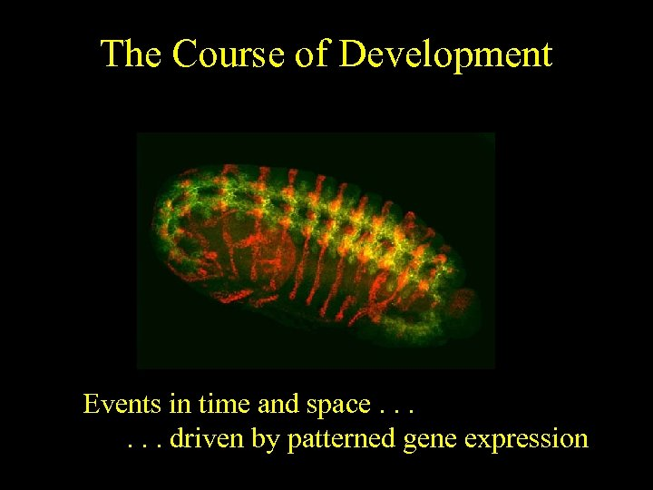 The Course of Development Events in time and space. . . driven by patterned