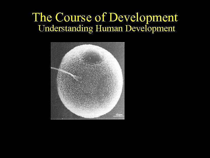 The Course of Development Understanding Human Development