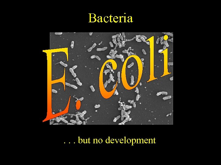 Bacteria . . . but no development