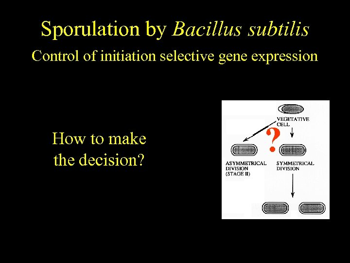 Bacillus subtilis Sporulation by Bacillus subtilis Temporally regulated differentiation Control of initiation selective gene