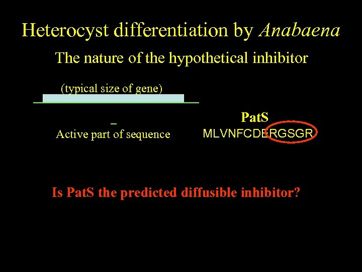 Heterocyst differentiation by Anabaena The nature of the hypothetical inhibitor (typical size of gene)
