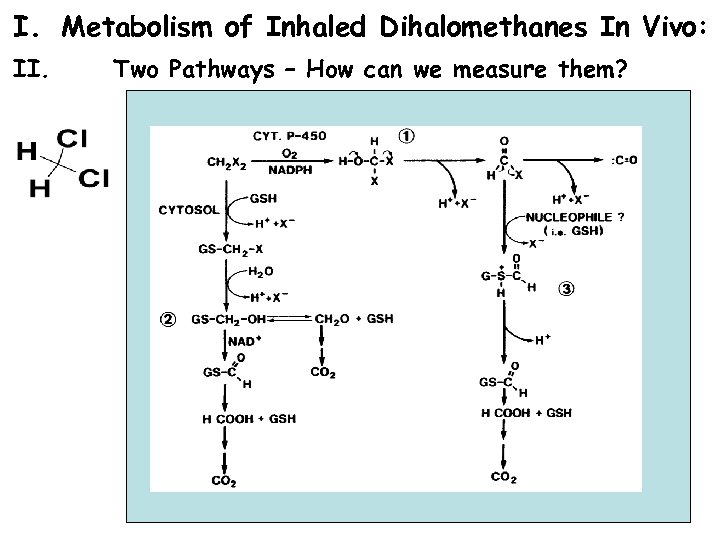 I. Metabolism of Inhaled Dihalomethanes In Vivo: II. Two Pathways – How can we