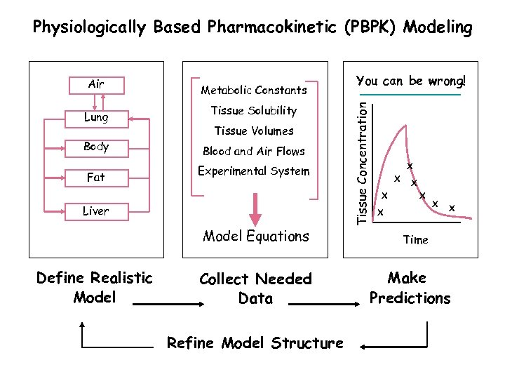 Physiologically Based Pharmacokinetic (PBPK) Modeling Lung Body Fat Metabolic Constants Tissue Solubility Tissue Volumes