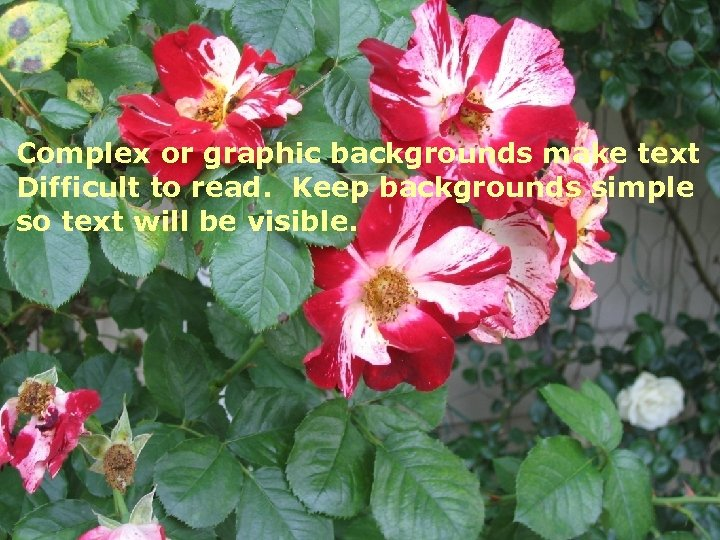 Complex or graphic backgrounds make text Difficult to read. Keep backgrounds simple so text