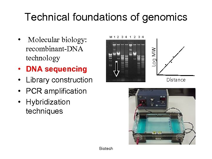 Technical foundations of genomics Log MW • Molecular biology: recombinant-DNA technology • DNA sequencing