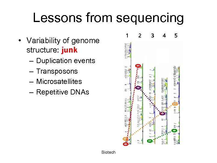 Lessons from sequencing 1 • Variability of genome structure: junk – – Duplication events