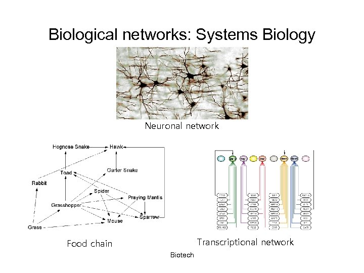 Biological networks: Systems Biology Neuronal network Transcriptional network Food chain Biotech