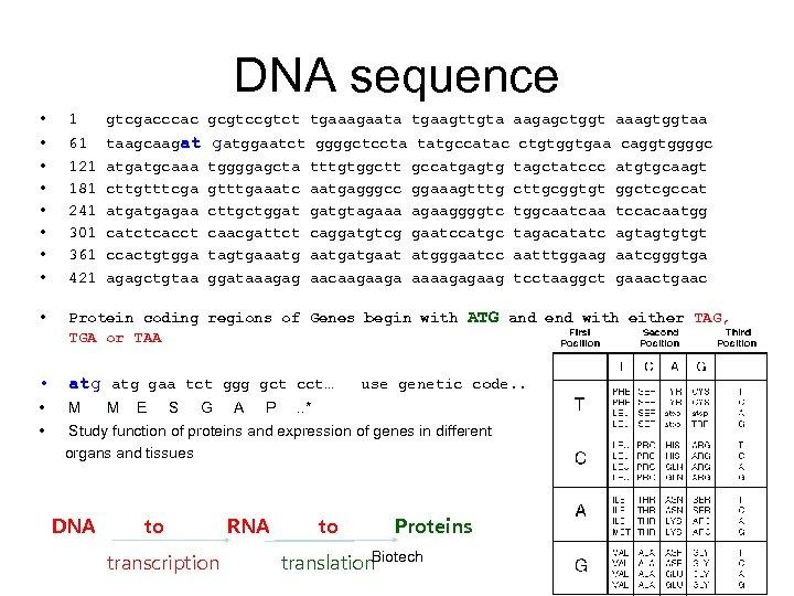 DNA sequence • 1 gtcgacccac gcgtct tgaaagaata tgaagttgta aagagctggt aaagtggtaa • • 61 121