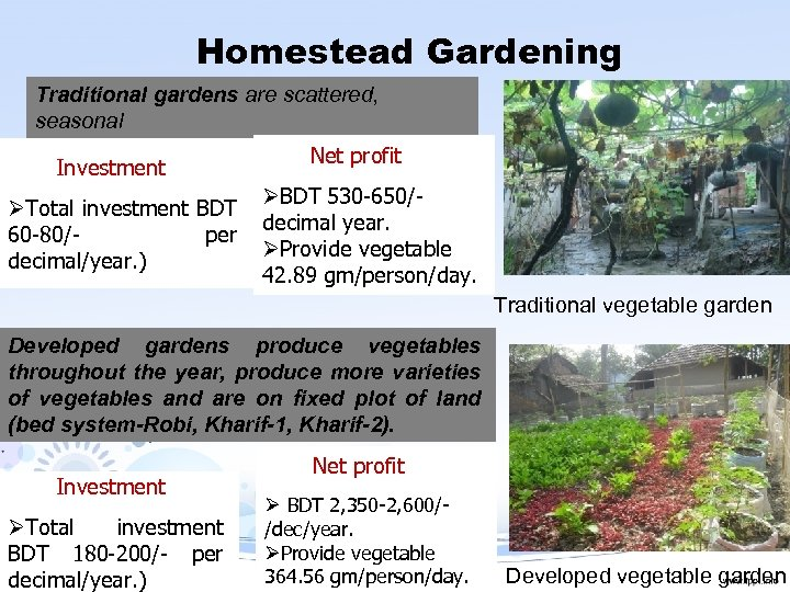 Homestead Gardening Traditional gardens are scattered, seasonal Investment ØTotal investment BDT 60 -80/per decimal/year.