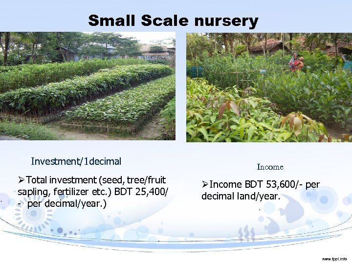 Small Scale nursery Investment/1 decimal ØTotal investment (seed, tree/fruit sapling, fertilizer etc. ) BDT