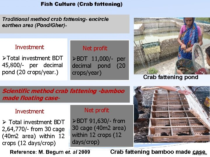 Fish Culture (Crab fattening) Traditional method crab fattening- encircle earthen area (Pond/Gher)- Investment ØTotal