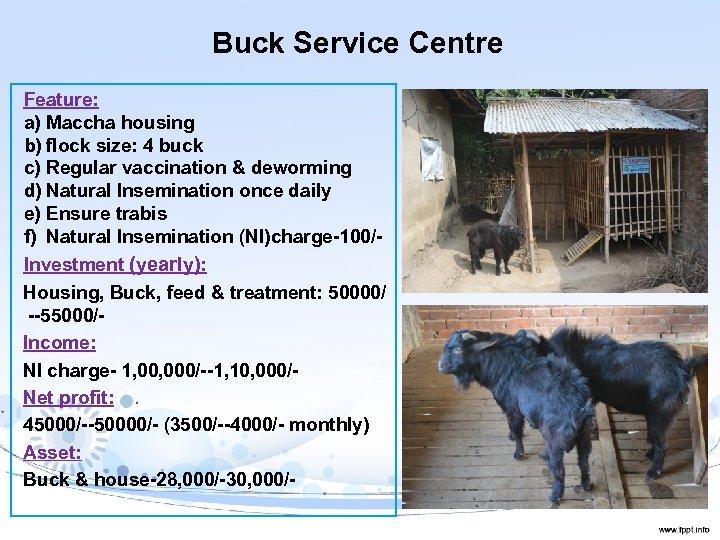 Buck Service Centre Feature: a) Maccha housing b) flock size: 4 buck c) Regular