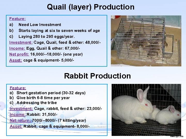 Quail (layer) Production Feature: a) Need Low Investment b) Starts laying at six to