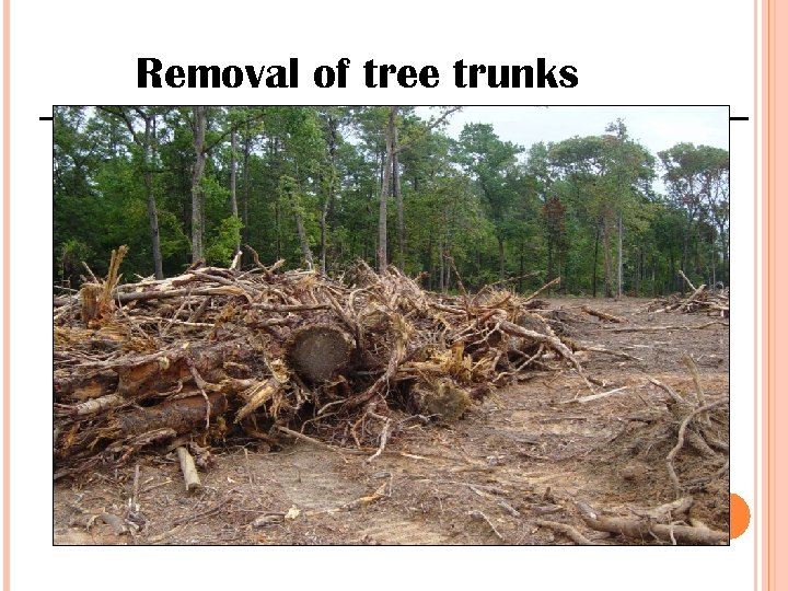 Removal of tree trunks