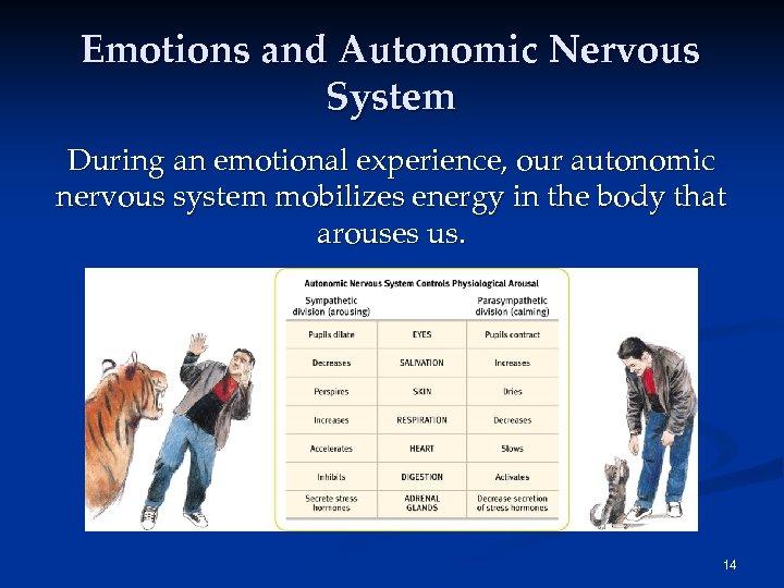 Emotions and Autonomic Nervous System During an emotional experience, our autonomic nervous system mobilizes