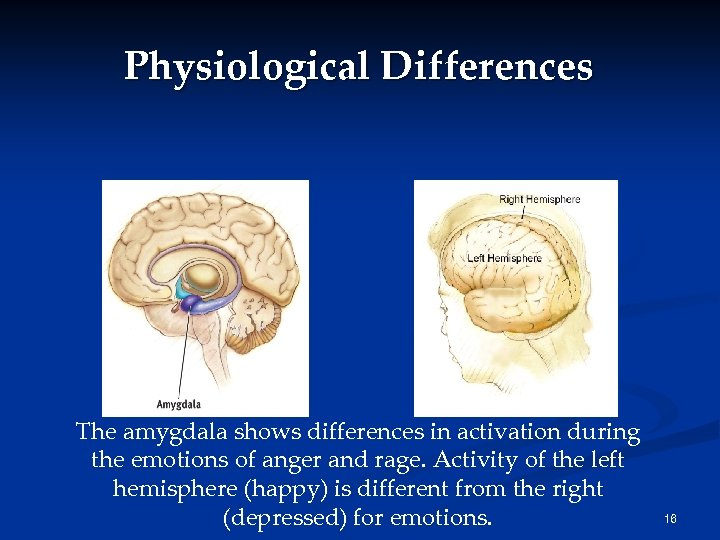 Physiological Differences The amygdala shows differences in activation during the emotions of anger and