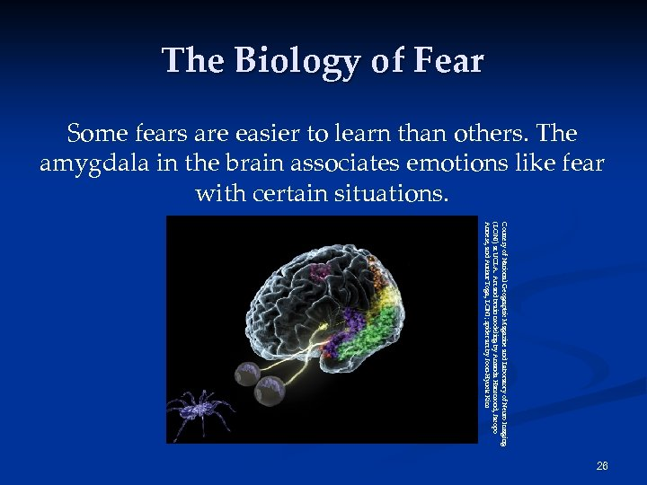 The Biology of Fear Some fears are easier to learn than others. The amygdala