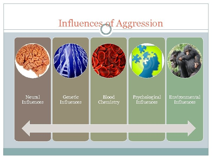 Influences of Aggression Neural Influences Genetic Influences Blood Chemistry Psychological Influences Environmental Influences