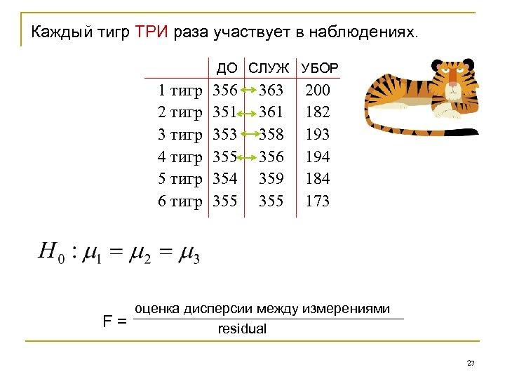 Каждый тигр ТРИ раза участвует в наблюдениях. ДО СЛУЖ УБОР 1 тигр 2 тигр