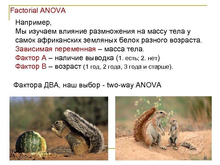 Factorial ANOVA Например, Мы изучаем влияние размножения на массу тела у самок африканских земляных