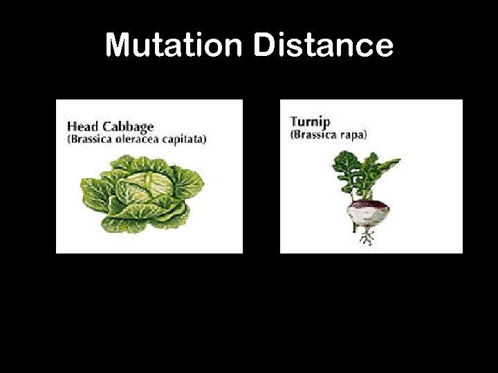 Mutation Distance