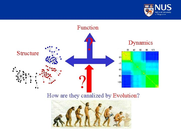 Function Structure ? Dynamics ? How are they canalized by Evolution?