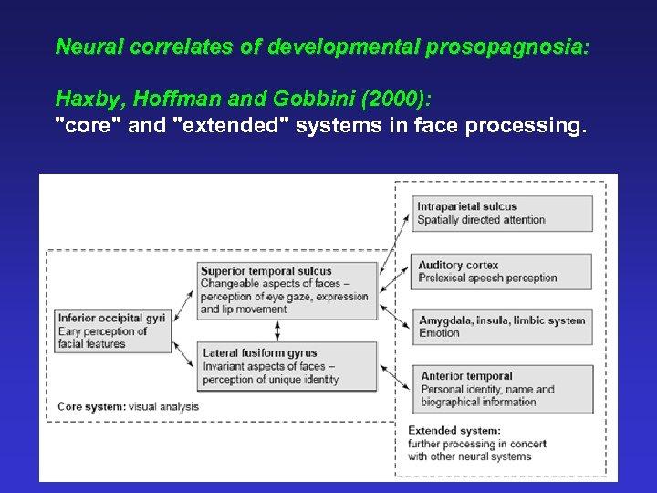 Neural correlates of developmental prosopagnosia: Haxby, Hoffman and Gobbini (2000):