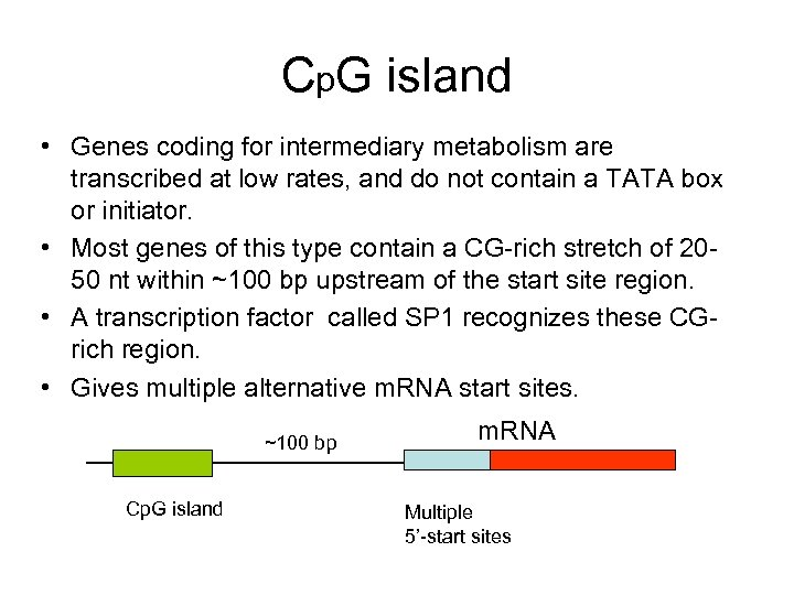 Cp. G island • Genes coding for intermediary metabolism are transcribed at low rates,