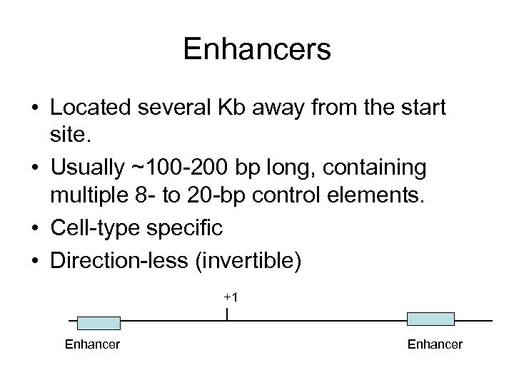 Enhancers • Located several Kb away from the start site. • Usually ~100 -200
