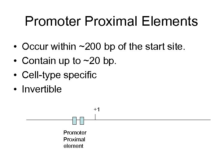 Promoter Proximal Elements • • Occur within ~200 bp of the start site. Contain