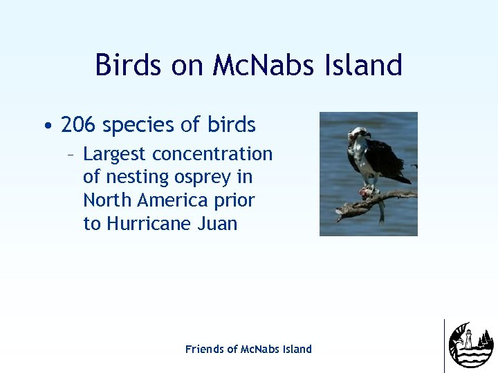 Birds on Mc. Nabs Island • 206 species of birds – Largest concentration of