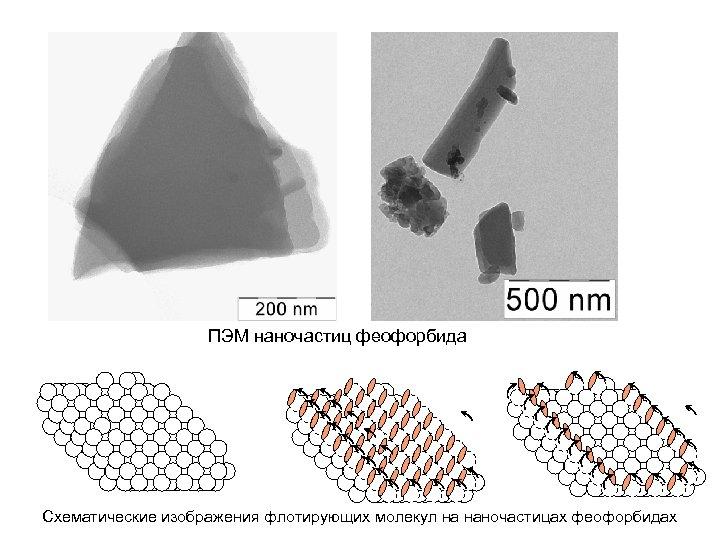 ПЭМ наночастиц феофорбида Схематические изображения флотирующих молекул на наночастицах феофорбидах