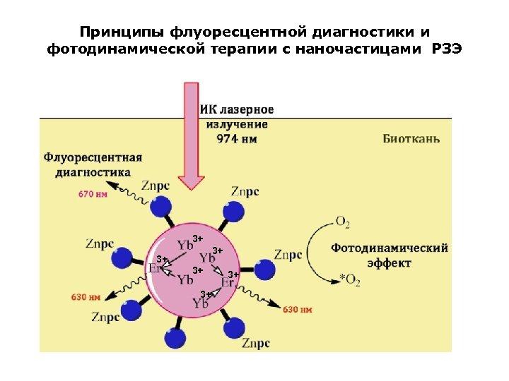 Принципы флуоресцентной диагностики и фотодинамической терапии с наночастицами РЗЭ 3+ 3+ 3+