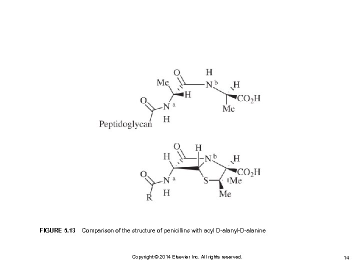 FIGURE 5. 13 Comparison of the structure of penicillins with acyl D-alanyl-D-alanine Copyright © 2014