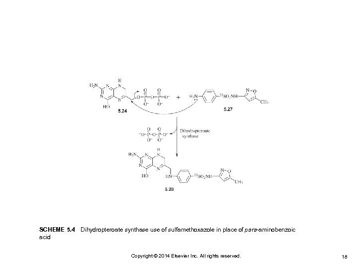 SCHEME 5. 4 Dihydropteroate synthase use of sulfamethoxazole in place of para-aminobenzoic acid Copyright ©