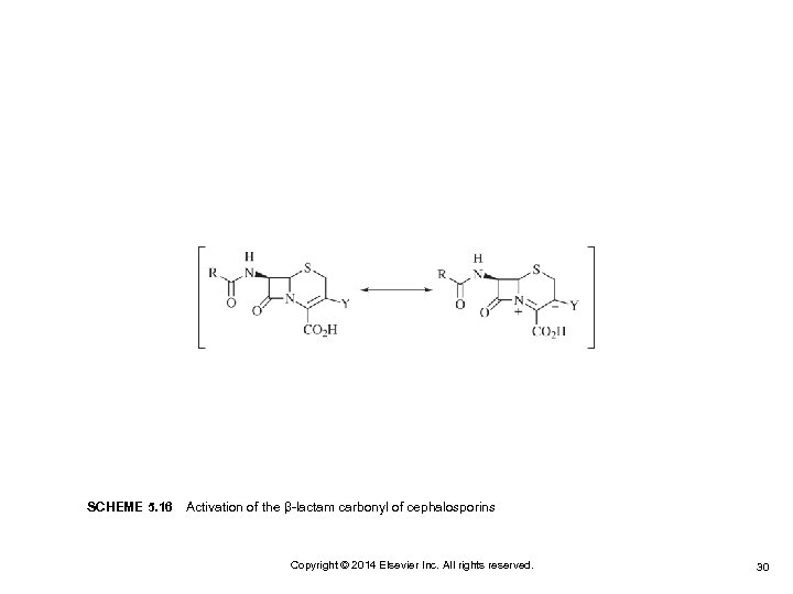 SCHEME 5. 16 Activation of the β-lactam carbonyl of cephalosporins Copyright © 2014 Elsevier Inc.
