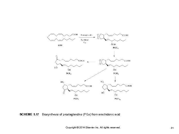 SCHEME 5. 17 Biosynthesis of prostaglandins (PGs) from arachidonic acid Copyright © 2014 Elsevier Inc.