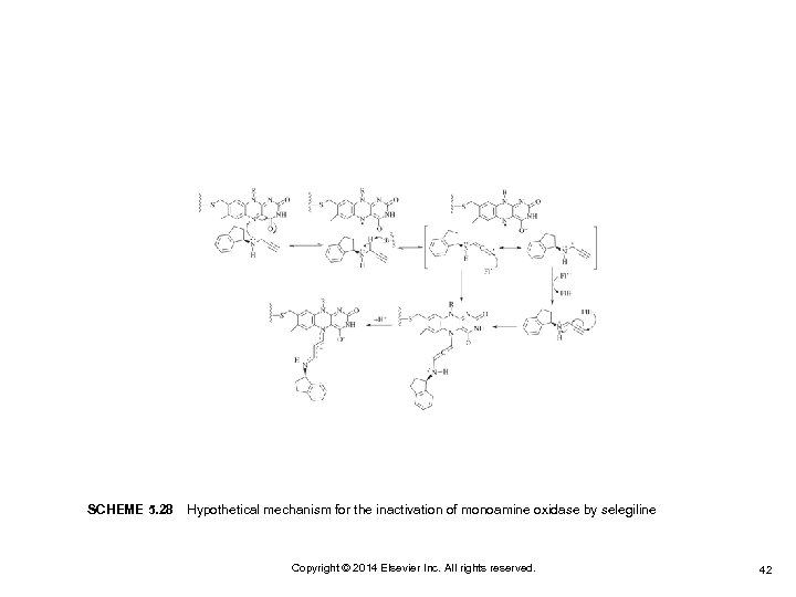 SCHEME 5. 28 Hypothetical mechanism for the inactivation of monoamine oxidase by selegiline Copyright ©