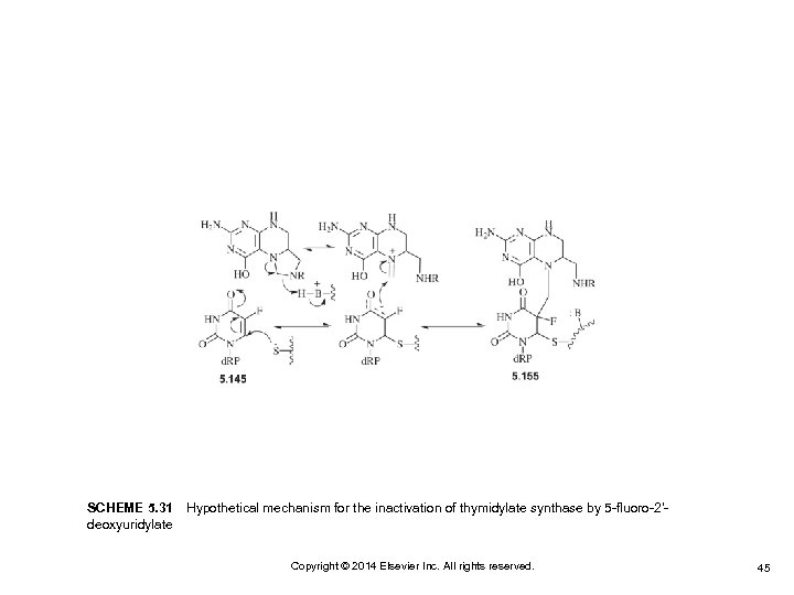 SCHEME 5. 31Hypothetical mechanism for the inactivation of thymidylate synthase by 5 -fluoro-2′deoxyuridylate Copyright