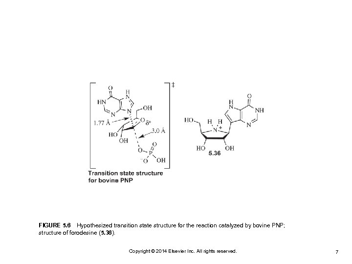 FIGURE 5. 6 Hypothesized transition state structure for the reaction catalyzed by bovine PNP; structure