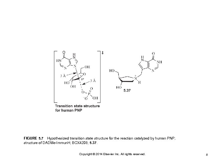 FIGURE 5. 7Hypothesized transition state structure for the reaction catalyzed by human PNP; structure