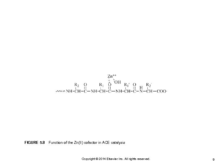 FIGURE 5. 8 Function of the Zn(II) cofactor in ACE catalysis Copyright © 2014 Elsevier