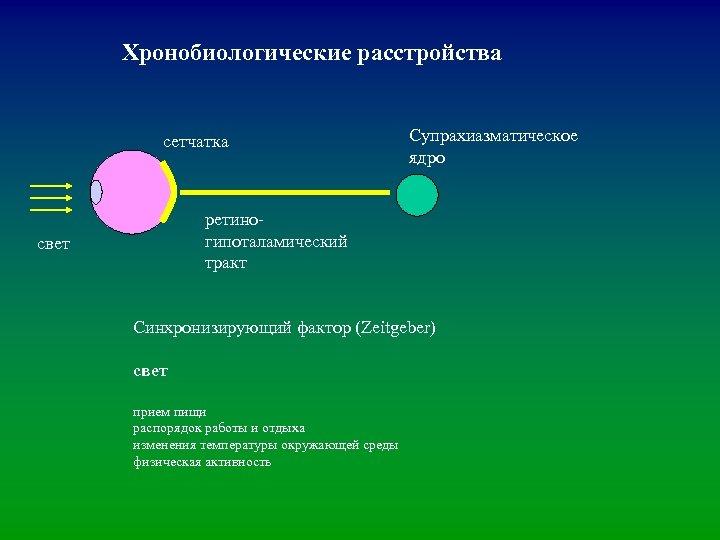 Хронобиологические расстройства сетчатка Супрахиазматическое ядро ретиногипоталамический тракт свет Синхронизирующий фактор (Zeitgeber) свет прием пищи