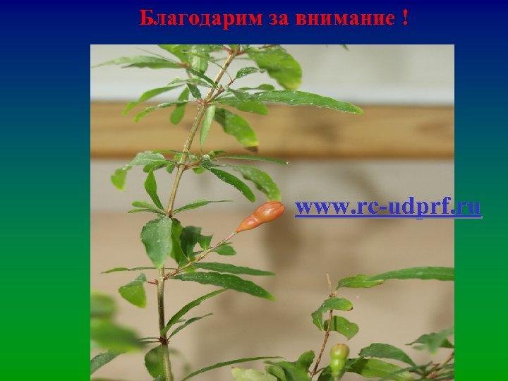 Благодарим за внимание ! www. rc-udprf. ru